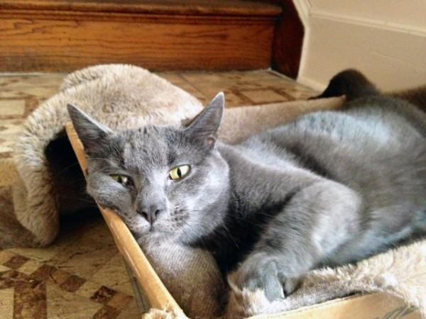 Smokey, St. John's Rectory feline friend.